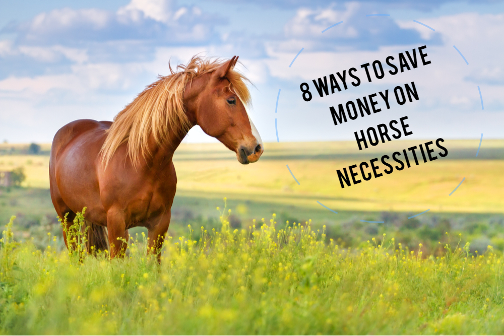 8 Ways to Save Money When You Own a Horse