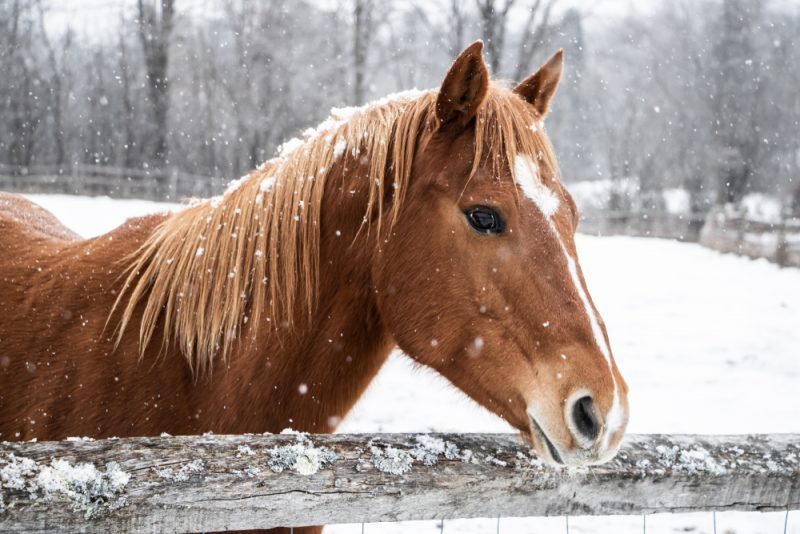 Make sure your horses and livestock are getting the necessary water, especially during the winter months.